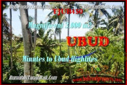 FOR SALE Beautiful 3.000 m2 LAND IN UBUD TJUB450