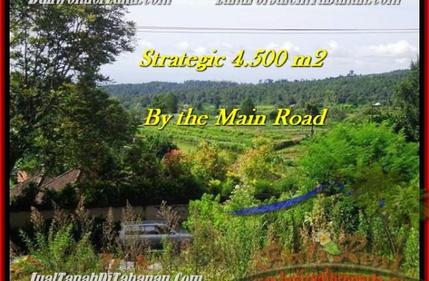 Affordable Tabanan Bedugul BALI LAND FOR SALE