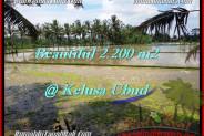 Magnificent 2,200 m2 LAND FOR SALE IN UBUD BALI TJUB475