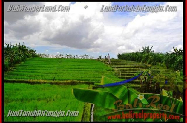 Affordable LAND SALE IN CANGGU BALI TJCG141