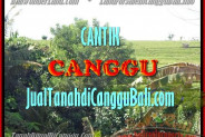 Beautiful LAND SALE IN Canggu Pererenan TJCG143