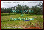 Beautiful PROPERTY LAND IN UBUD FOR SALE TJUB461