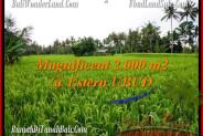 FOR SALE Magnificent LAND IN Ubud Pejeng BALI TJUB485