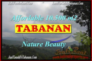 Beautiful PROPERTY Sukasada 10,500 m2 LAND FOR SALE TJTB165