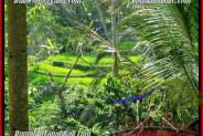 Exotic 725 m2 LAND IN UBUD BALI FOR SALE TJUB495