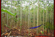 FOR SALE Beautiful LAND IN Tabanan Selemadeg BALI TJTB159
