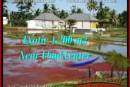FOR SALE Exotic LAND IN Sentral Ubud BALI TJUB502