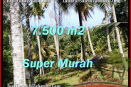 TABANAN 7,500 m2 LAND FOR SALE TJTB207