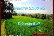 Magnificent 2,300 m2 LAND FOR SALE IN TABANAN BALI TJTB209