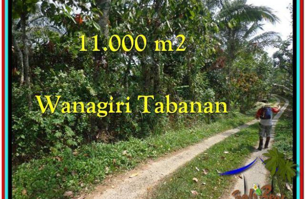 FOR SALE Magnificent PROPERTY 11.000 m2 LAND IN TABANAN BALI TJTB213