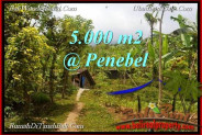 Magnificent PROPERTY LAND FOR SALE IN TABANAN TJTB215
