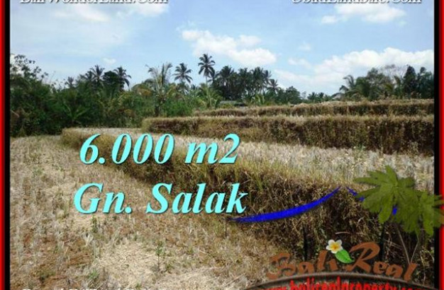 Affordable LAND FOR SALE IN Tabanan Selemadeg BALI TJTB221