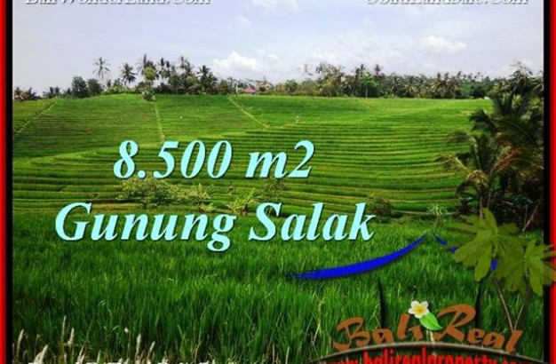 Affordable PROPERTY TABANAN BALI 8,500 m2 LAND FOR SALE TJTB223