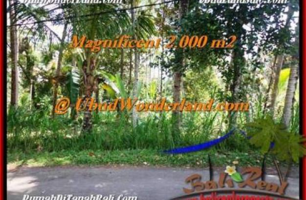 LAND SALE IN Ubud Payangan BALI TJUB506