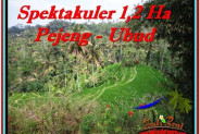 FOR SALE Exotic PROPERTY 12,000 m2 LAND IN UBUD BALI TJUB520