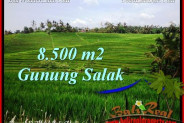 Affordable PROPERTY 8,500 m2 LAND SALE IN TABANAN BALI TJTB223