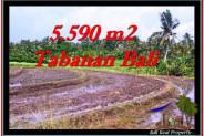 Beautiful LAND FOR SALE IN TABANAN TJTB257
