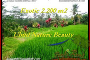 Exotic PROPERTY 2,200 m2 LAND FOR SALE IN Ubud Tegalalang TJUB480