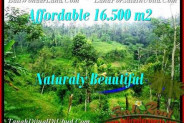 FOR SALE Magnificent 16,500 m2 LAND IN UBUD BALI TJUB494