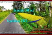 Exotic PROPERTY Ubud Tegalalang 700 m2 LAND FOR SALE TJUB497