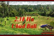 Magnificent 21,800 m2 LAND SALE IN UBUD BALI TJUB546