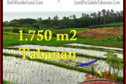 Exotic PROPERTY 1,775 m2 LAND FOR SALE IN Tabanan Selemadeg TJTB264