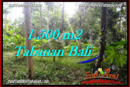 Magnificent PROPERTY 1,500 m2 LAND FOR SALE IN Tabanan Penebel TJTB279