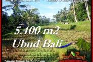 Beautiful PROPERTY 5,400 m2 LAND IN Ubud Payangan FOR SALE TJUB554