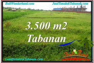 Exotic Tabanan Kerambitan BALI LAND FOR SALE TJTB302