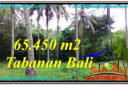 Beautiful PROPERTY 65,450 m2 LAND IN Tabanan Selemadeg FOR SALE TJTB290