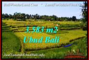 Beautiful PROPERTY Ubud Pejeng BALI 3,583 m2 LAND FOR SALE TJUB542