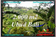 Exotic 2,000 m2 LAND SALE IN UBUD BALI TJUB573