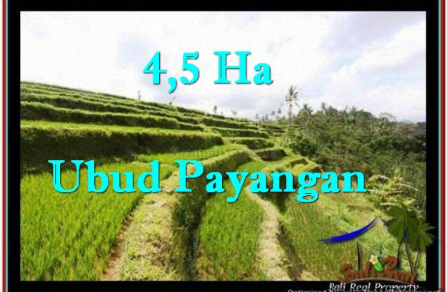 FOR SALE Exotic PROPERTY LAND IN UBUD TJUB533
