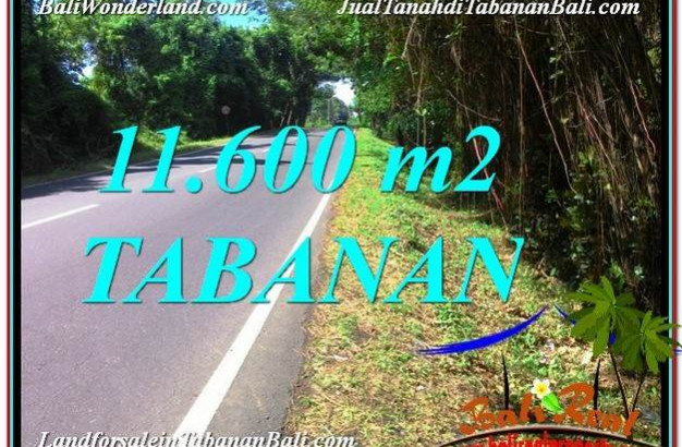Beautiful PROPERTY TABANAN 11,600 m2 LAND FOR SALE TJTB327