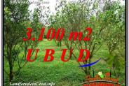 FOR SALE Exotic 3,100 m2 LAND IN UBUD BALI TJUB593