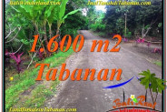 Exotic PROPERTY 1,600 m2 LAND IN TABANAN FOR SALE TJTB337