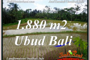FOR SALE Magnificent 1,880 m2 LAND IN UBUD BALI TJUB613