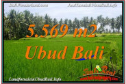 Exotic 5,569 m2 LAND FOR SALE IN UBUD BALI TJUB642