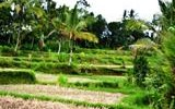 TJUB041 land for sale in ubud bali 06