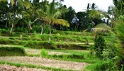 TJUB041 land for sale in ubud bali