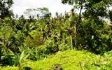 TJUB042 land for sale in ubud bali 01