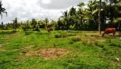 TJUB057 land for sale in ubud bali