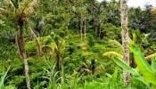 TJUB060 land for sale in ubud bali 01