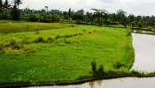 TJUB062 land for sale in ubud bali