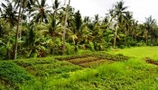 TJUB064 land for sale in ubud bali