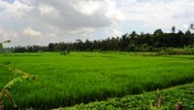 TJUB067 land for sale in ubud bali 02