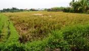 TJUB070 land for sale in ubud bali 02