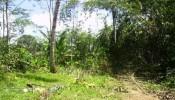 TJUB076-land-for-sale-in-ubud-bali-09.jpg