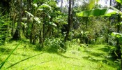 -land-for-sale-in-ubud-bali
