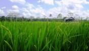 TJUB077-land-for-sale-in-ubud-bali